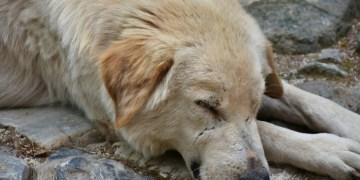 Proponen hasta seis años de cárcel a quien abandone, maltrate, mutile o cause la muerte de animales de compañía 11