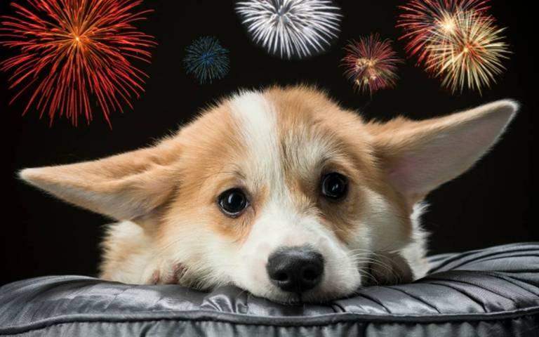 Consejos para tranquilizar a tu perro en época de fuegos artificiales 1