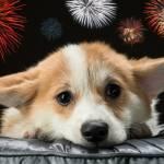 Consejos para tranquilizar a tu perro en época de fuegos artificiales 5