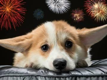 Consejos para tranquilizar a tu perro en época de fuegos artificiales 9