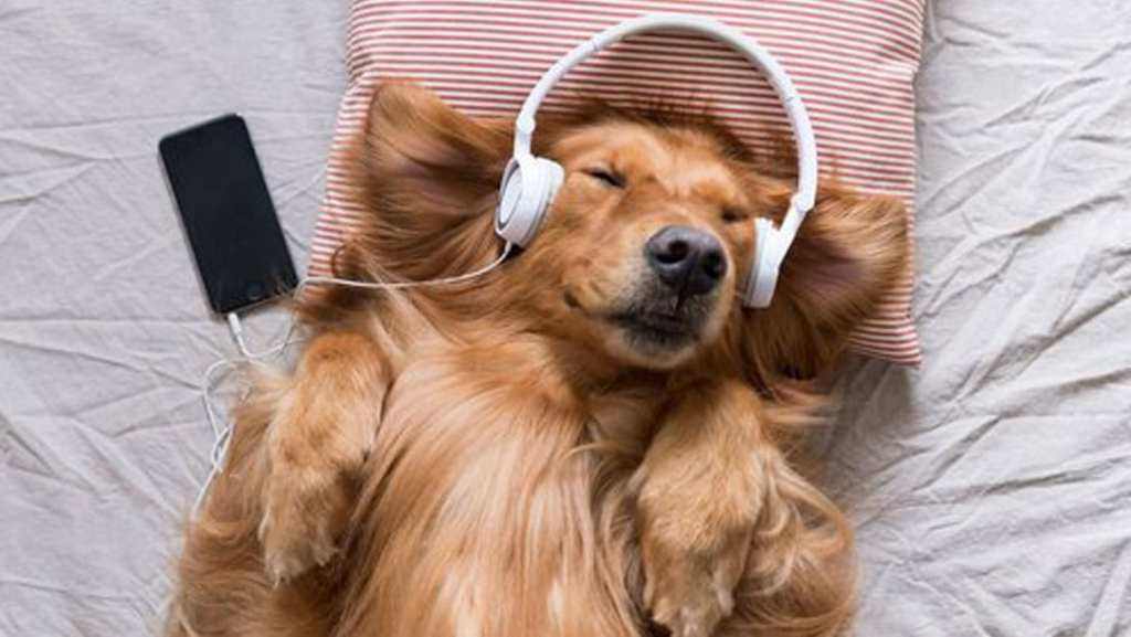 Consejos para tranquilizar a tu perro en época de fuegos artificiales 6