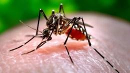 mosquito_dengue