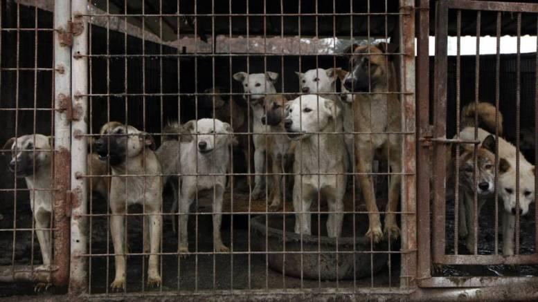 crìa de caninos para alimentaciòn