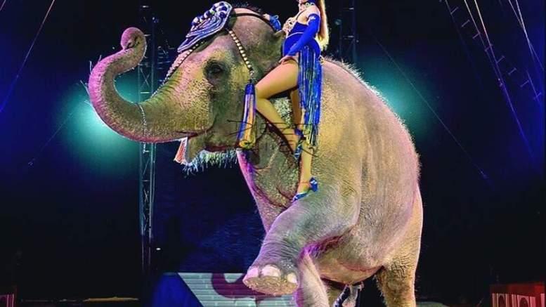 Elefante-Alemania