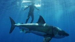tiburon-ataca