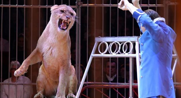leona de circo