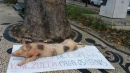 cerdo en plaza