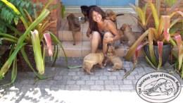resguardo de perros por dorian