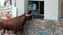 toro-aterrorizado