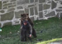 4047dc2f08c422a43c6430815243ead6 - Un oso ataca a un hombre en un parque