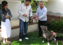 5b62d01506bd8a53b6c4928e25fa9b8a - César Millán encantara perros españoles junto a famosos
