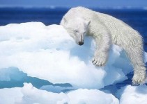 f2db05517411d6eb0e1fc32654b32d49 - El deshielo del Ártico abre una segunda ruta navegable
