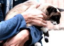 14539468928e429f2da74154ccea470c - Guardia Civil requisa catorce armas de fuego a cazador por disparar a un gato