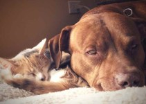 Hay más gatos que perros como animal de compañía