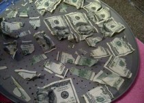 a906ecd58b062801ef8efce6e1a38d4d - Perro se come 1000 dolares