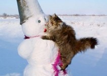 04569d66ab2e12b5b6037077bb4881b0 - Gatos relocos en la nieve