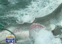 """07dab03de8c7702ed11a3f082edd419f - Tiburón blanco literalmente partido a la mitad por otro """"monstruo"""" desconocido. Foto y vídeo."""