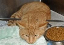 9d7c1c9b941763c2b63d9c921f6a9d0f - Un gato callejero sobrevive a alguien que le disparó con un arco