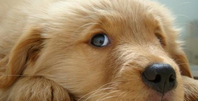 d3a6ffb9fa95acd07ae12a9b3648acf3 - ¿Cuántas palabras nos pueden entender los perros?