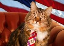 8086eff79b547ba5f77319d83cfb55a4 - Insólito: Gato es candidato al senado de Estados Unidos