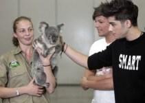 b7c3b7a4bb8bc266a517106bd9599927 - Un cantante afirma que contrajo enfermedad sexual de un koala
