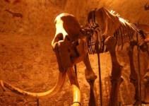 2ce85df04f10d845d088abd07283ce75 - El mamut más pequeño medía 90 cm de alto y habitó en la isla de Creta