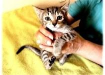 e7a7db55704b10f5842044165d3d8c04 - Refugio de gatos busca voluntarios y casas de acogida en Murcia