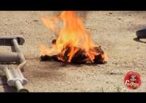7ba5e11106dd7feb7611e06f19eb9d6d - Mi perrito esta ardiendo