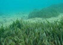 e194bc2b752ce10f9bc3ab028b7c6fad - La NASA descubre un bosque de plantas marinas bajo el hielo del Ártico