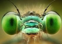 47ed312dbee39b4feb4a261300270374 - Impresionantes imágenes de insectos revelan sorprendentes colores