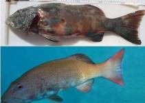 1ae347252c216c8744266e7d4e156329 - Aparecen los primeros peces con cáncer de piel