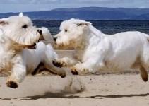 7ffa0a6eb51c9388ce14c9e4c32eb6e0 - Imágenes del mejor fotógrafo de perros del mundo