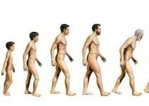 18a30248707b02ced05d1e20645ce489 - Test: calcula tu edad biológica