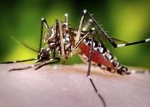 1cc013b4b30bb2f3138b82c49b6ffbba - Mosquitos genéticamente modificados para combatir la malaria y el dengue