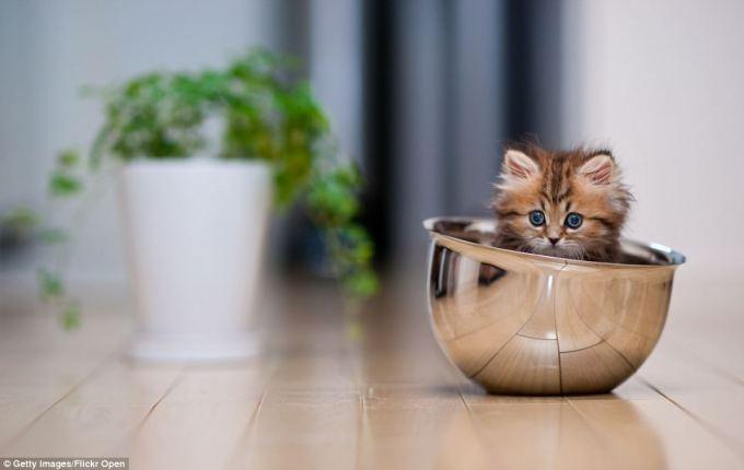 noticiascuriosas Daisy, la gatita más querida de Internet