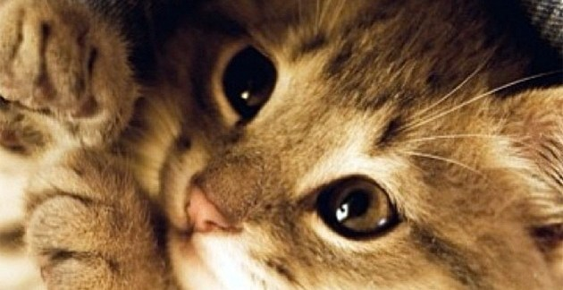 b038186ec492989d9c0c508951d41fd3 - ¡Belleza interminable! Estos pequeños animales te harán suspirar de ternura