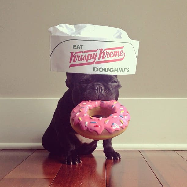 bulldog gracioso 16 - ▷ Trotter el bulldog frances mas gracioso de Instagram 😍