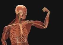 """f7724547f17b9a1373fb429f1124f806 - """"¿Cuántos días podemos estar sin dormir?"""": 10 límites del cuerpo humano"""