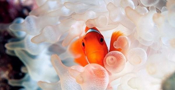 405b09458c97cf5b6bd2ee2be99807fb - Impresionantes fotografías de National Geographic