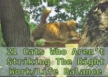 980b587f8f43a2bec21c11d2f59e861c - 21 gatos que no están en huelga el complicado equilibrio de trabajo y vida