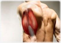 986df435889be9856ca407742e178643 - Descubren cómo desarrollar músculos sin ir al gimnasio