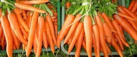 027981ec990f556d8370a14e3e774061 - Crean combustible a partir de zanahorias