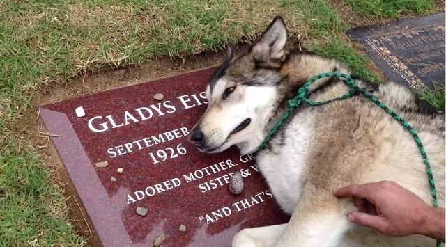 826865d7c58185b88ff2463c28ea3d80 - #Video Un perro llora la muerte de su familiar en su tumba
