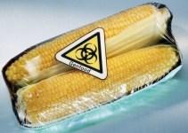 c19b15f2f214db2a095e013acc18f933 - El maíz transgénico además de pobre en nutrientes es tóxico