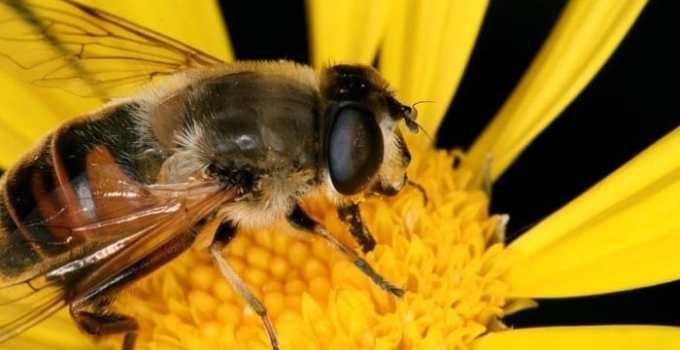 66e356113e5c1129f26a7eaa3ebbd45c - Europa prohíbe tres pesticidas que matan a las abejas