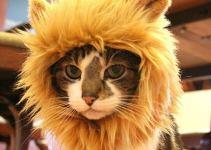 9235268519f7d8b49deba49d56b12b44 - Gorro de león para gatos