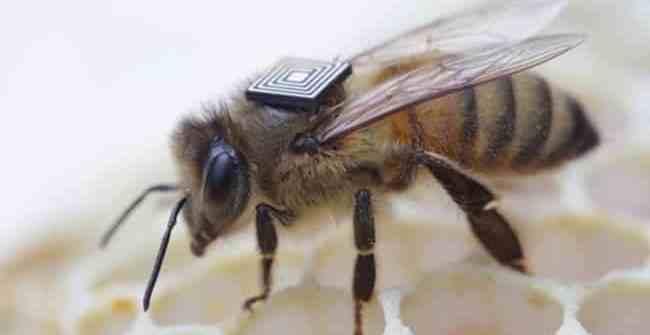 f249d2d223759126fd91eac3235976a9 - Intel Edison podría ayudar a solucionar el grave colapso de colonias de abejas