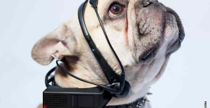 07de1368303c9802c2890f2299851723 - Un dispositivo permite traducir los ladridos en palabras