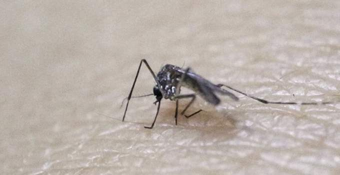 42bb003c23700e936cc1d2cdc7468fda - Virus del Zika: ¿Es un mosquito modificado genéticamente el causante de la epidemia?