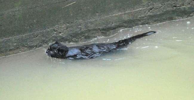 c6e4ab1d981c3128e4894a4e8c1af349 - Gato negro se rescata así mismo de un depósito de agua